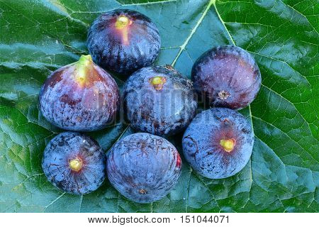 Seven ripe blue figs on big mulberry leaf background view from above