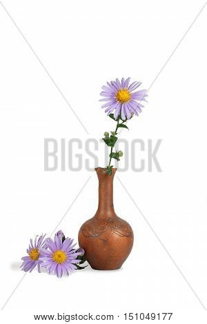 closeup flower of Michaelmas daisies (botanical name: Aster novi-belgii or Symphyotrichum novi-belgii) also known as New York asters in the clay pitcher isolated on white