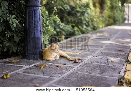 Ginger cat relaxing on an urban sidewalk lying contentedly at the food of an old wrought iron lamppost