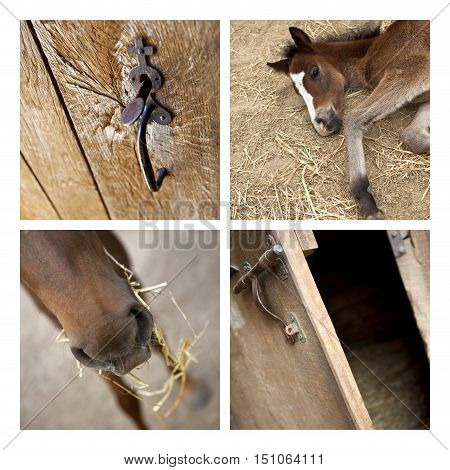 Collage of horses and details in a stable
