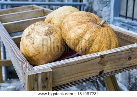 Fresh whole pumpkins in a wooden crate outdoors conceptual of the autumn season fall harvest thanksgiving or halloween