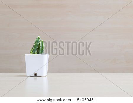Closeup cactus in white plastic pot on blurred wood desk and wood wall textured background with copy space