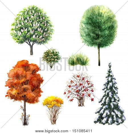 Hand drawn watercolor illustration. Set of trees and bushes during different seasons. Evergreen and deciduous plants isolated on white.