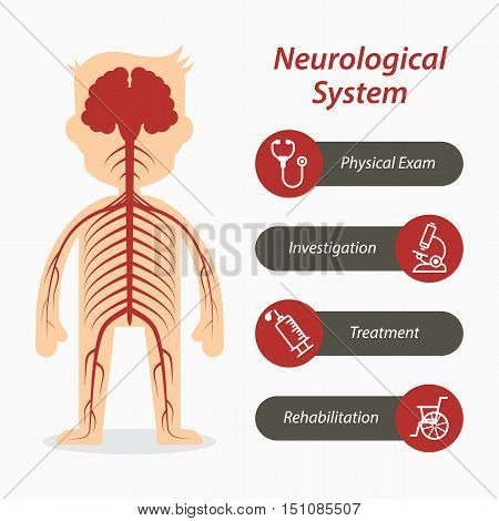 Neurological system and medical line icon .