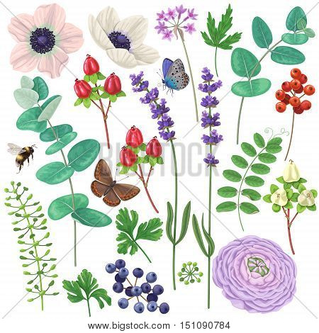 Colorful floral elements set. Flowers leaves berries butterflies and flying bumblebee isolated on white. Bouquet components.