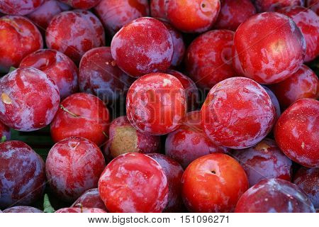 Fresh Red Plums On Retail Market Display Close Up