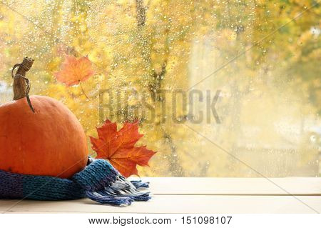 ripe pumpkin wrapped in a woolen scarf next to the window with the autumn landscape / holiday outfit for a Happy Halloween