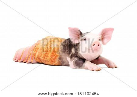 Conceptual image, portrait of a pig becomes into sausage, isolated on white background