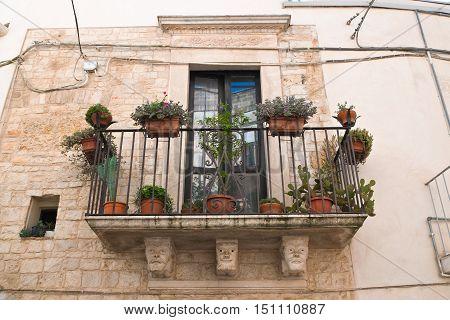 Historical palace. Acquaviva delle fonti. Puglia. Italy.