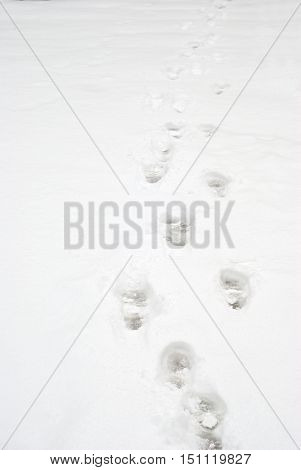 Shoe footprints in the snow at winter