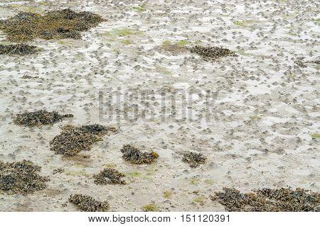 full frame wet beach detail at ebb tide seen in Brittany France