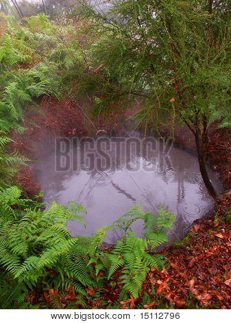 Kuirau Park - New Zeland