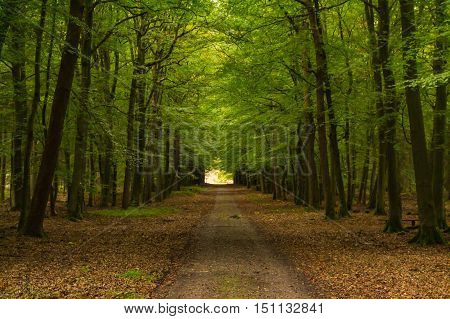 through forest you can feel only really the wonderful nature