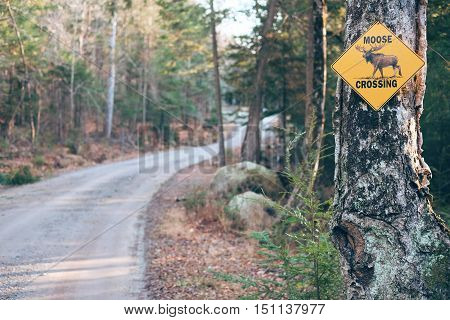 Moose Crossing Sign on the Road. Nature Landscape