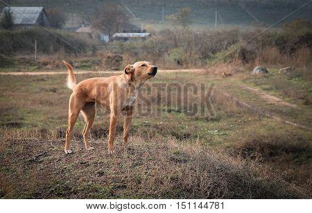 Barking dog. True friend. Property security. Barking.