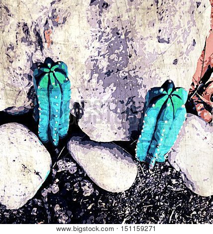 green cactus on the ground with stone background