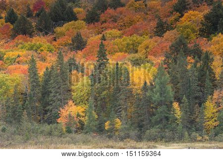 Algonquin Park in the fall season with colorful trees