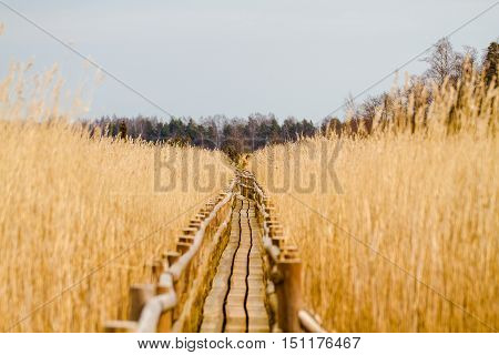 Route to nowhere-Wooden plank trail in the lake, one of the bird-watching sites Latvian-Kaņiera lake.
