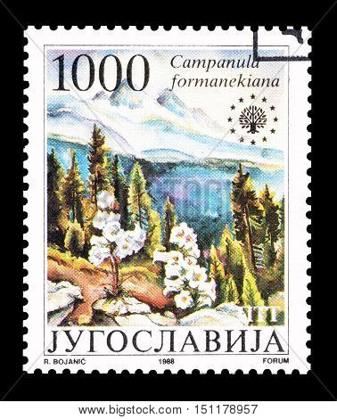 YUGOSLAVIA - CIRCA 1988 : Cancelled postage stamp printed by Yugoslavia, that shows Macedonian harebell.