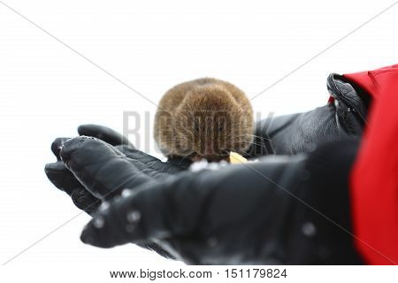 nature, animals, fauna, mouse, vole, field mouse, palm, animals, rodents