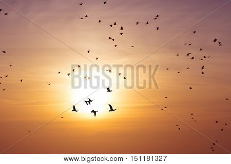 Spring or autumn migration of birds over sunset