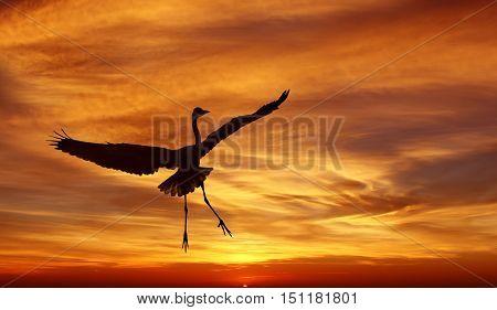 Beautiful tropical cranes against sunrise panoramic view