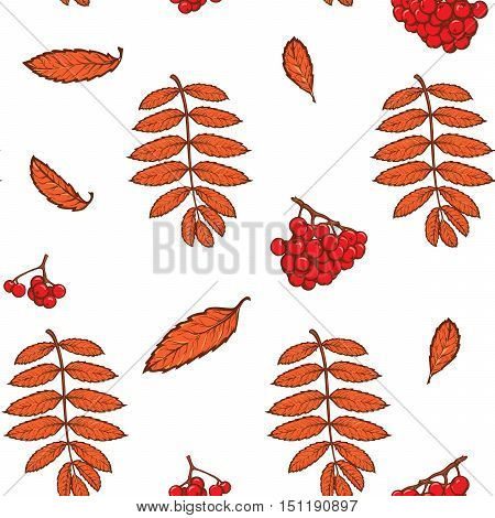 Autumn rowanberry leaves and berries. Detailed intricate hand drawing. Chaotic distribution of elements. Red on white seamless pattern. EPS10 vector illustration.