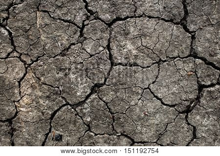 Drought land background. Closeup of dry cracked earth.