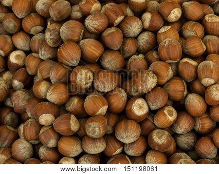 ripe hazelnut market in the autumn agriculture