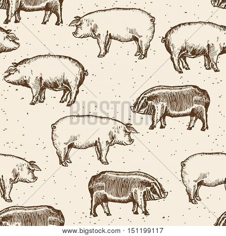 Pigs seamless pattern farm pigs hand drawn vintage vector