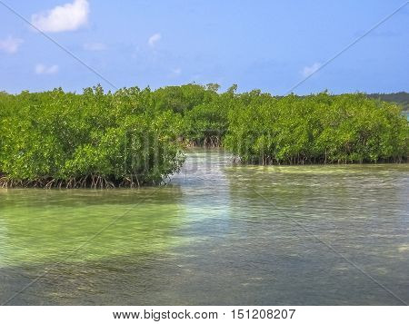 Mangrove of Isla Saona in Parque Nacional del Este, East National Park, Dominican Republic. Saona island is one of the most popular tours starting from Bayahibe village, a popular tourist destination.
