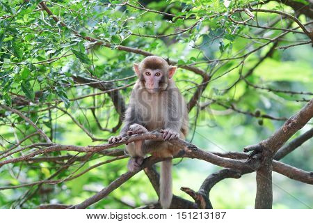 Monkey At Golden Hill, Hong Kong