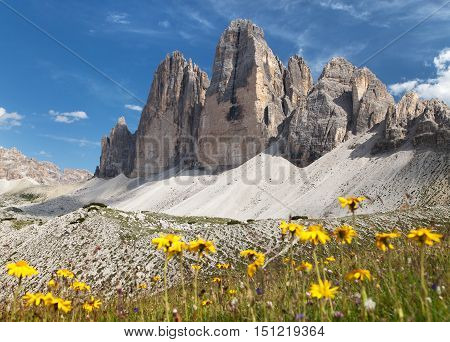 Drei Zinnen or Tre Cime di Lavaredo with beautiful flowering meadow Sextener Dolomiten or Dolomiti di Sesto South Tirol Dolomiten mountains view Italian Alps