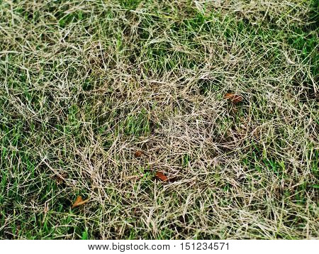 pile of white and green grass texture with small leaves background