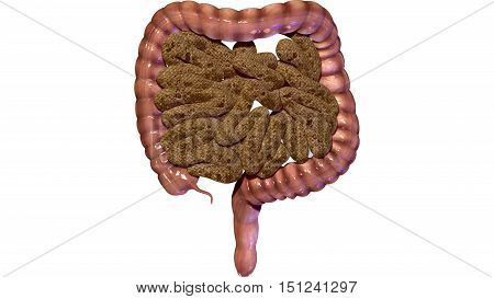 Human Digestive System Anatomy (Large and Small Intestine). 3D render
