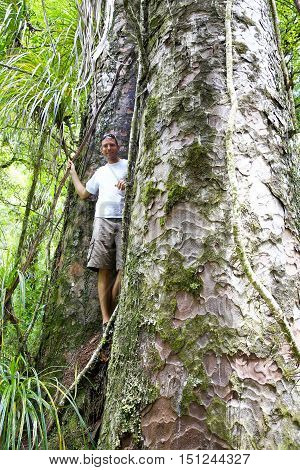 Young Man Standing Between Two Giant Trees In Kauri Forests