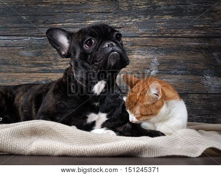 Dog and cat on a background of an old wooden wall. Pets sad dog crying and looking hopeful.