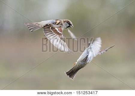 a pair of birds fly in the Park to spread its wings