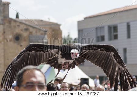 Avila, Spain - September 03, 2016 Falconry display in a medieval market with various birds of prey