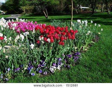 Flower Bed In Lawn
