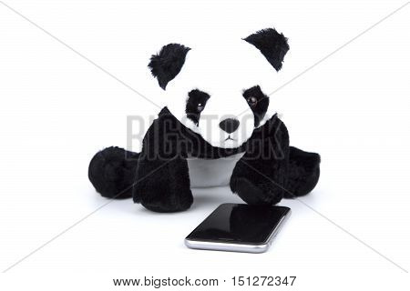 panda bear look at smart phone on white isolated