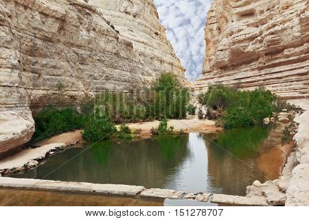 Very picturesque canyon Ein Avdat in the Negev desert. Yellow-brown canyon walls and green bushes are reflected in the creek Zin and small square pool