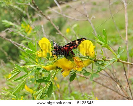 Beautiful butterfly on a yellow flower on a meadow