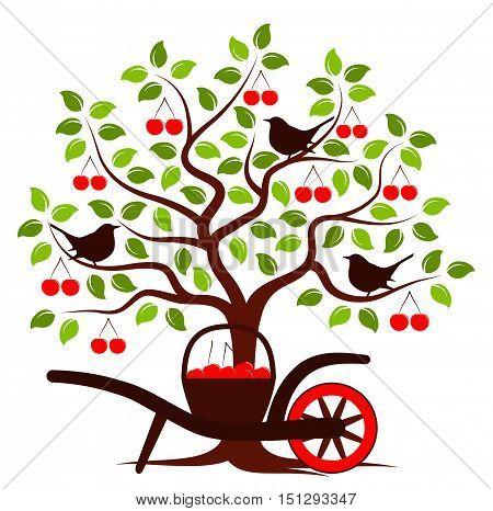 vector cherry tree with birds and hand barrow with basket of cherries isolated on white background