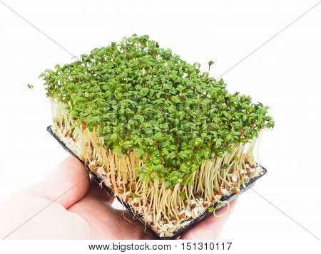 Person holding a tray of watercress up close