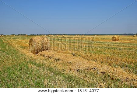 Bales Of Straw In Stubble Field After Harvesting