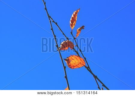 color full fall autumn background texture sky