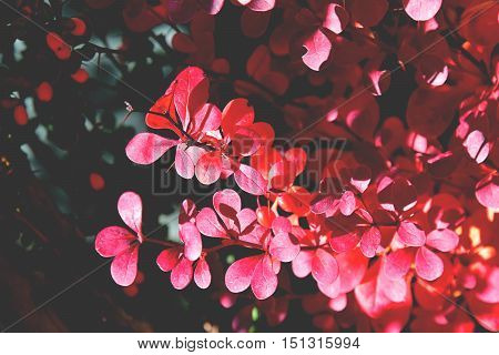 color full fall autumn background texture red