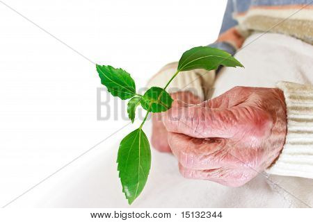 Senior woman holding green plant