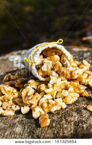 Overflowing burlap sack of fresh shelled walnuts on a rustic grunge surface with copy space above